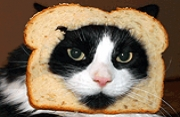 Bread That Cat!