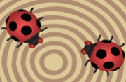 Crazy Ladybugs